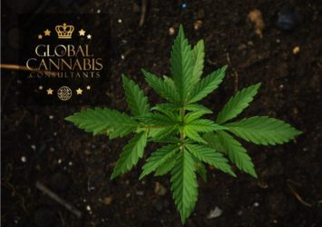 Global Cannabis Consultants - Customized Nutrients