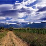 Llivnature CBD farm Spain