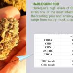 Harlequin CBD flowers bulk Italy