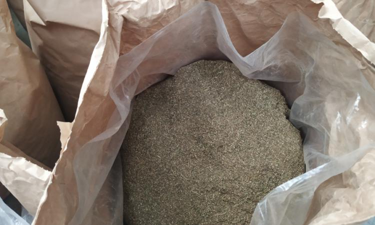 hemp-agronomics-CBG-biomass