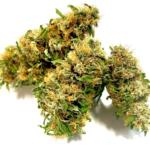 CBG Plus Flower CBG 5-6% Spain