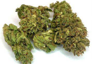 Juicy Mountain Fruit CBD flower bulk