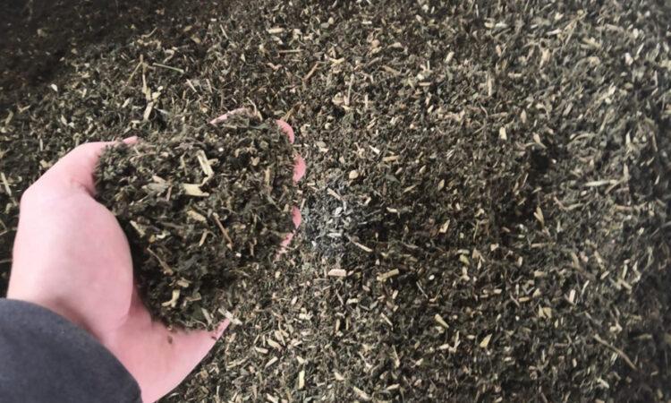 hemporia-di-sacchini-oscar-biomass