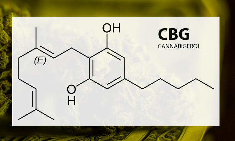 CBG - Cannabigerol - Mother of cannabinoids