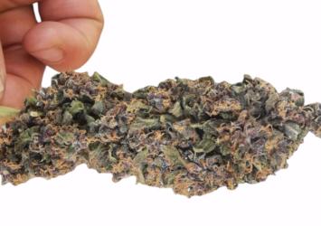 cbd flower purple 7-8% estonia
