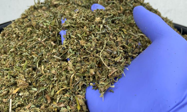 biomass_trim cbd 3-4% italy